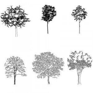 Cad Block of Detaljerte trær in dwg