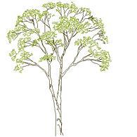 Cad Block of Kompleks treet høyde (2) in dwg