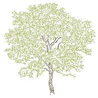 Cad Block of Kompleks treet høyde (8) in dwg