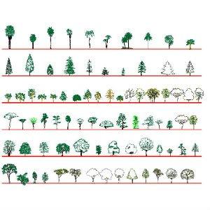 Cad Block of 81 trær: forfra, høyde in dwg